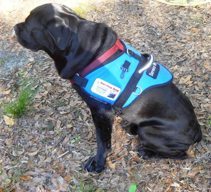 What is a seizure alert response service dog dwayne for Can fish have seizures